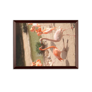 Sublimation Wall Plaque - Flamingo Friends Collection