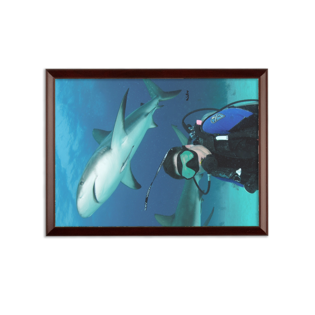 Sublimation Wall Plaque - Swimming With Sharks Collection
