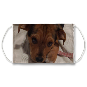 Face Mask Adjustable with Carbon Filter - Lucy Puppy