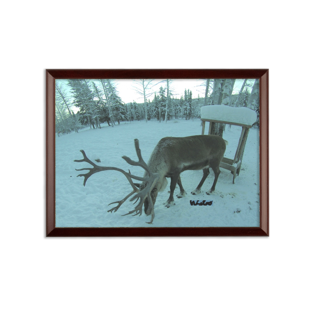 Sublimation Wall Plaque - Rudolph the Reindeer Collection