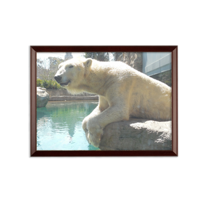 Sublimation Wall Plaque - Arctic Polar Bear Collection