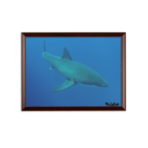 Sublimation Wall Plaque - Candy the Great White Shark Collection