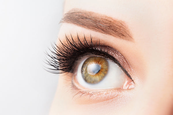 Female eye with long eyelashes, beautiful makeup and light brown eyebrow