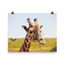 Load image into Gallery viewer, Giraffe Portrait Poster