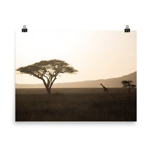 Lonely Sunset Giraffe Poster