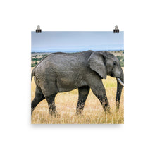 Load image into Gallery viewer, Young Elephant Poster