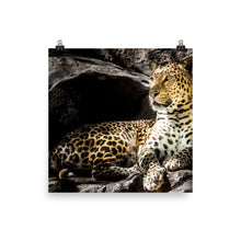 Load image into Gallery viewer, Lounging Leopard Poster
