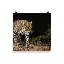 Load image into Gallery viewer, Beautiful Leopard Poster