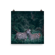 Load image into Gallery viewer, Zebras in Chobe Poster