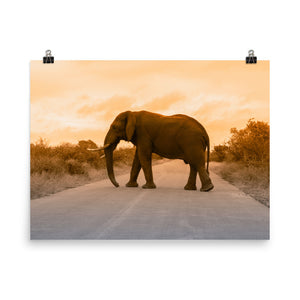 Elephant Crossing Road Poster