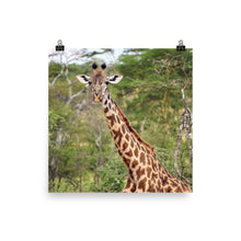 Load image into Gallery viewer, Giraffe Posing Poster