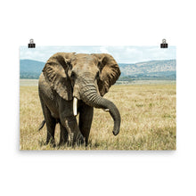Load image into Gallery viewer, Elephant at Lewa Safari Camp