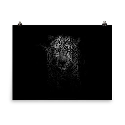Cyrus the Leopard Poster
