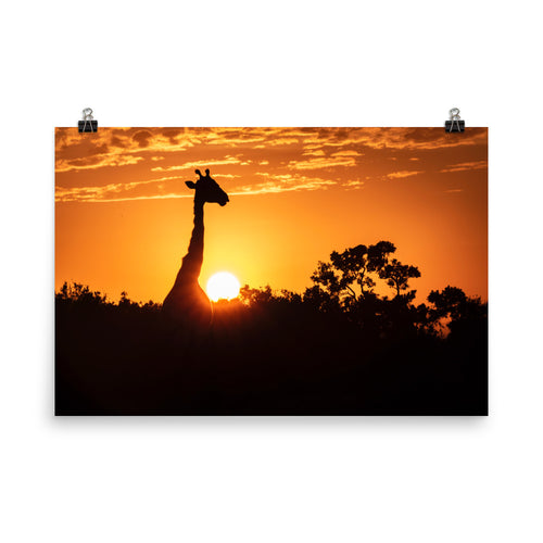 Giraffe in the Sunset Poster