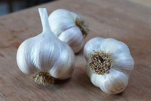deschutes canyon garlic, growing garlic, organic seed garlic, gourmet garlic, garlic farm, softneck garlic, organic garlic