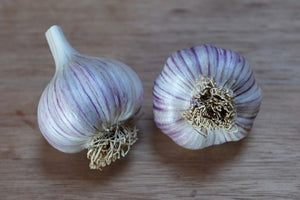 deschutes canyon garlic, growing garlic, organic seed garlic, gourmet garlic, garlic farm, hardneck garlic, softneck garlic, organic garlic