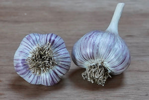 Organic Asian Tempest Seed Garlic