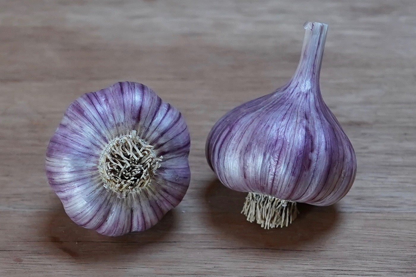 Organic Chesnok Red Seed Garlic