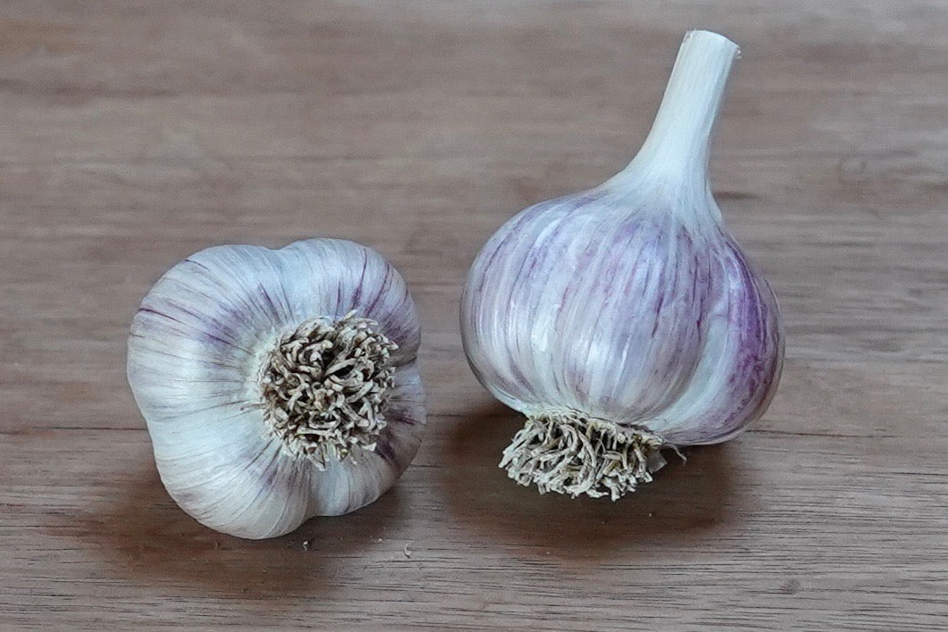 Organic Georgian Crystal Seed Garlic