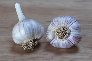 Organic German Red Seed Garlic