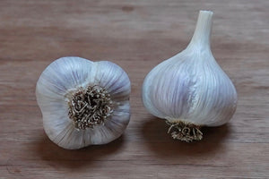 Organic Porcelain Garlic