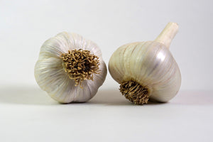 Organic Music Seed Garlic