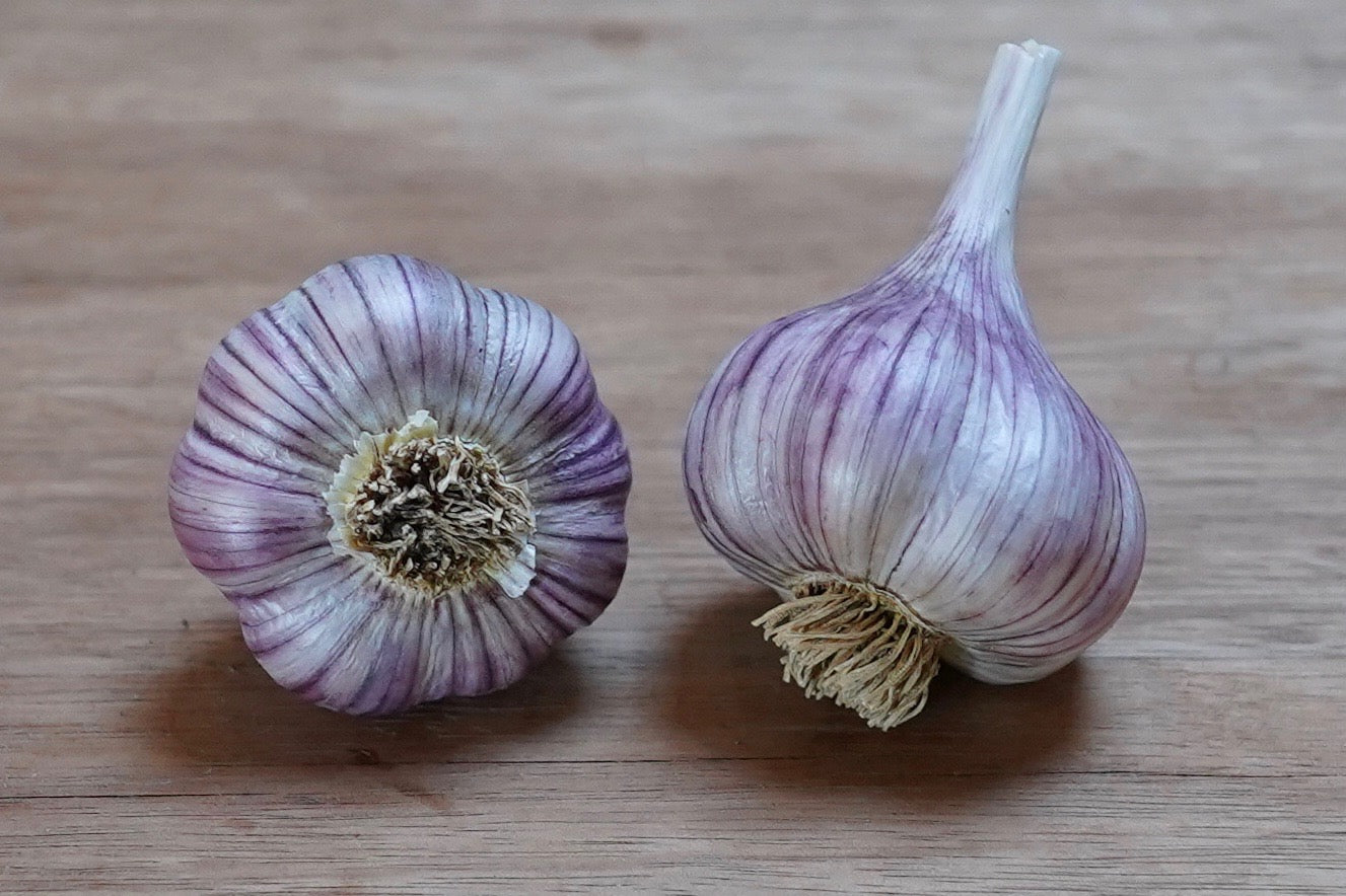 Organic Persian Star Seed Garlic