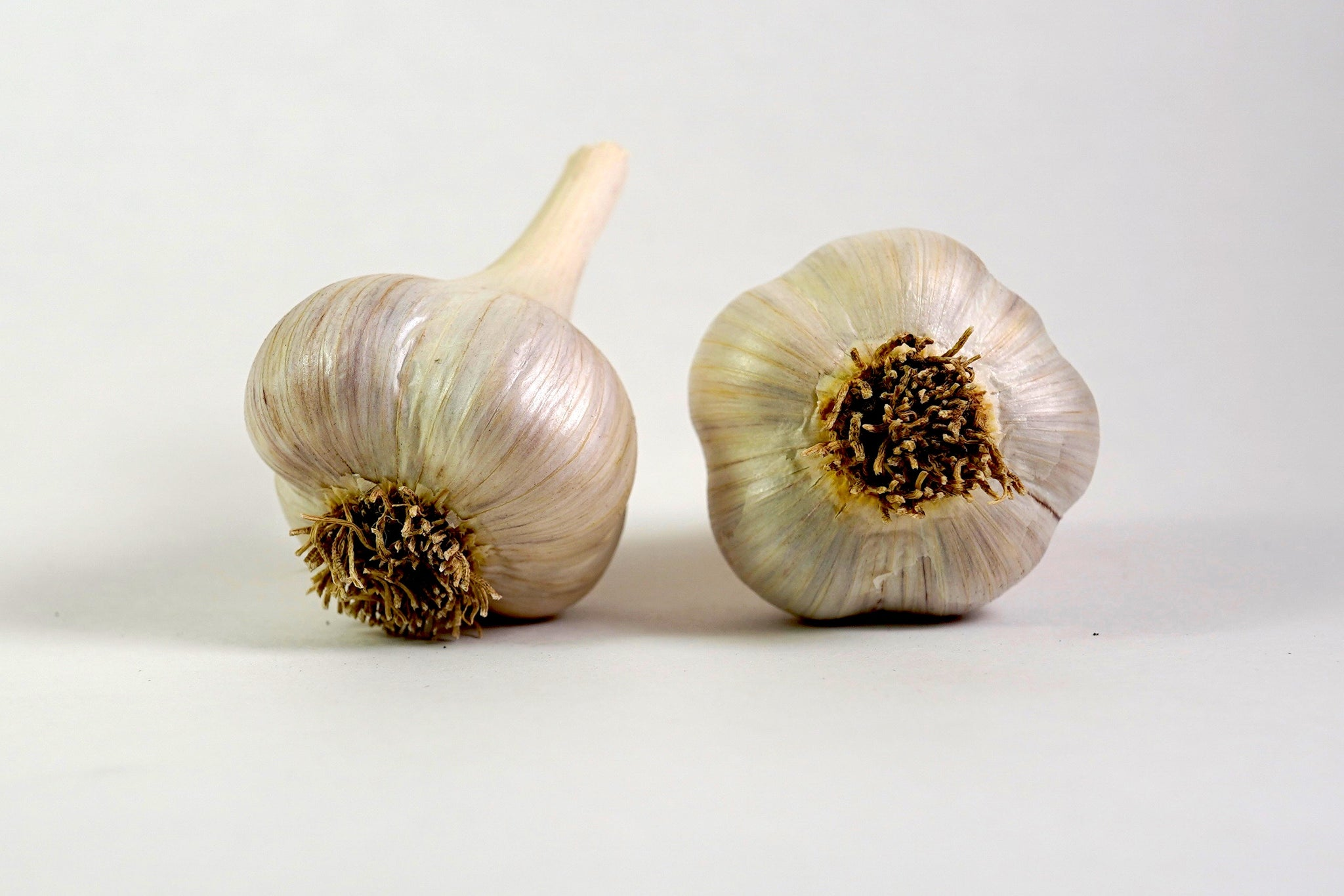 Organic Romanian Red Seed Garlic