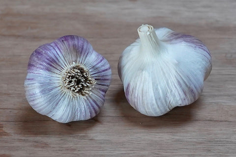 Organic Russian Red Seed Garlic