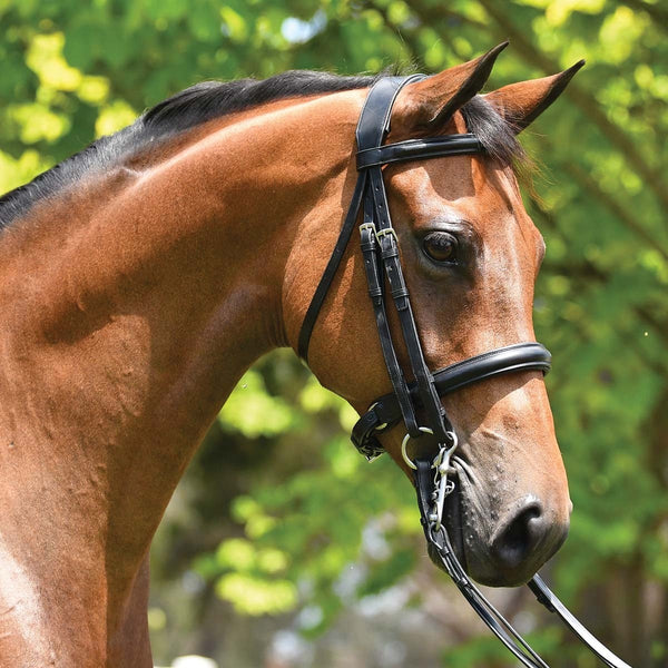 Grainge Dressage Weymouth