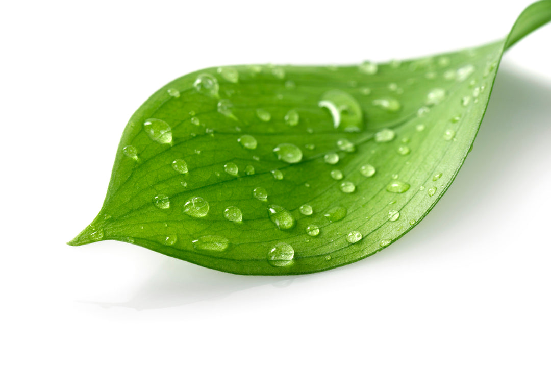 Leaf covered in water droplets
