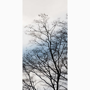 Metal Print - Japanese Maple Winter