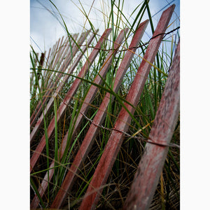 Metal Print - Beach Fence w/ Grass
