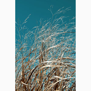 Metal Print - Sea Grass & Sky