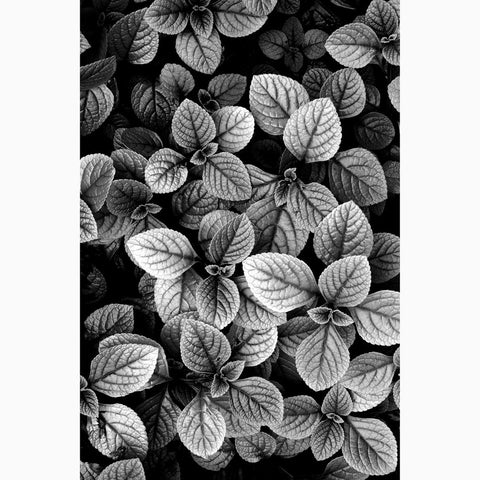 Metal Print - Leaves in Gray