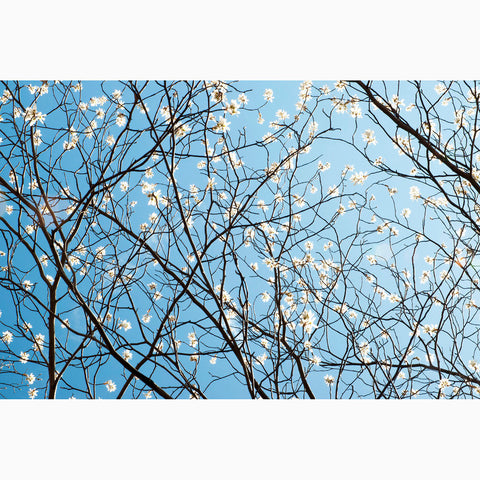 Metal Print - Blue Sky Branches