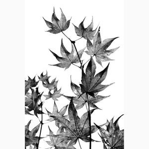 Metal Print - Japanese Maple