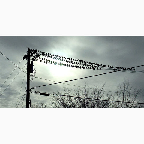 Metal Print - Birds on Wires