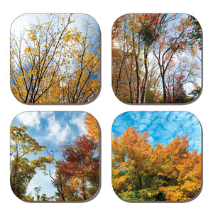 Coaster Set - Autumn Trees