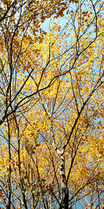Metal Print - Autumn Tangle