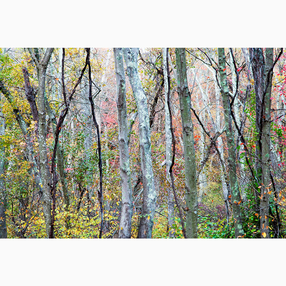 Metal Print - Forest