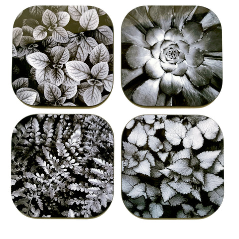 Coaster Set - Nature Black & White