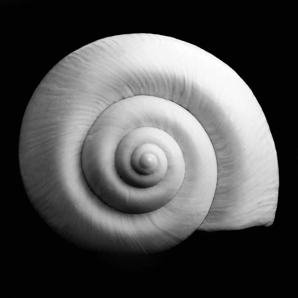 Metal Print - Nautilus on Black
