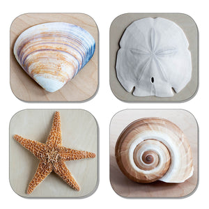 Coaster Set - Shells