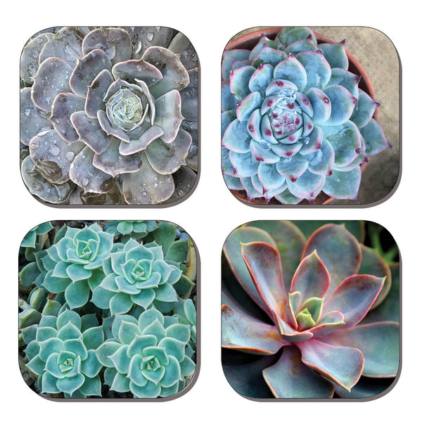 Coaster Set - Succulents
