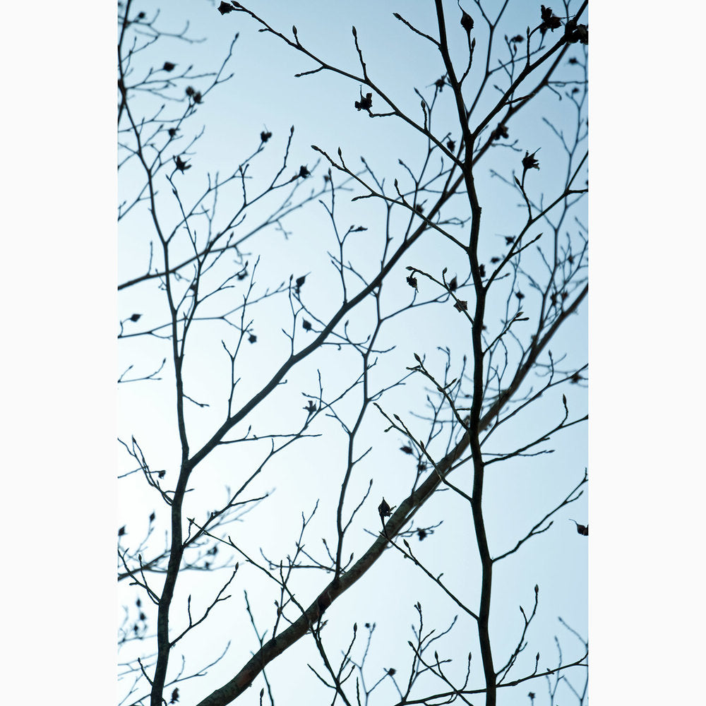 Metal Print - Twilight