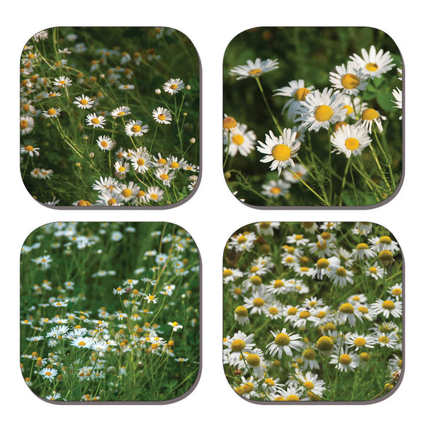 Coaster Set - Daisies