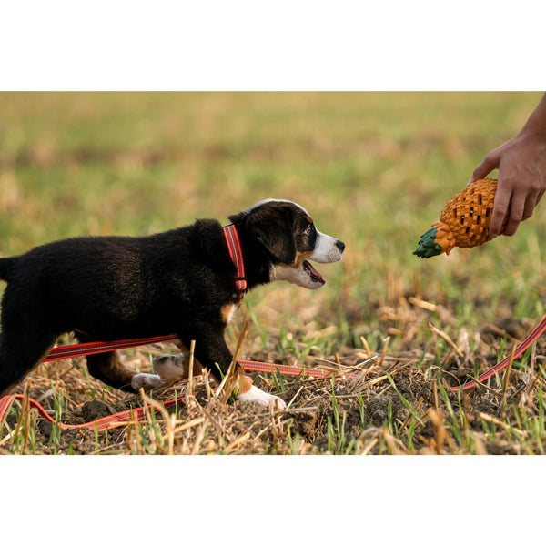 HERM SPRENGER DOG TOY- FRUIT CHALLENGE