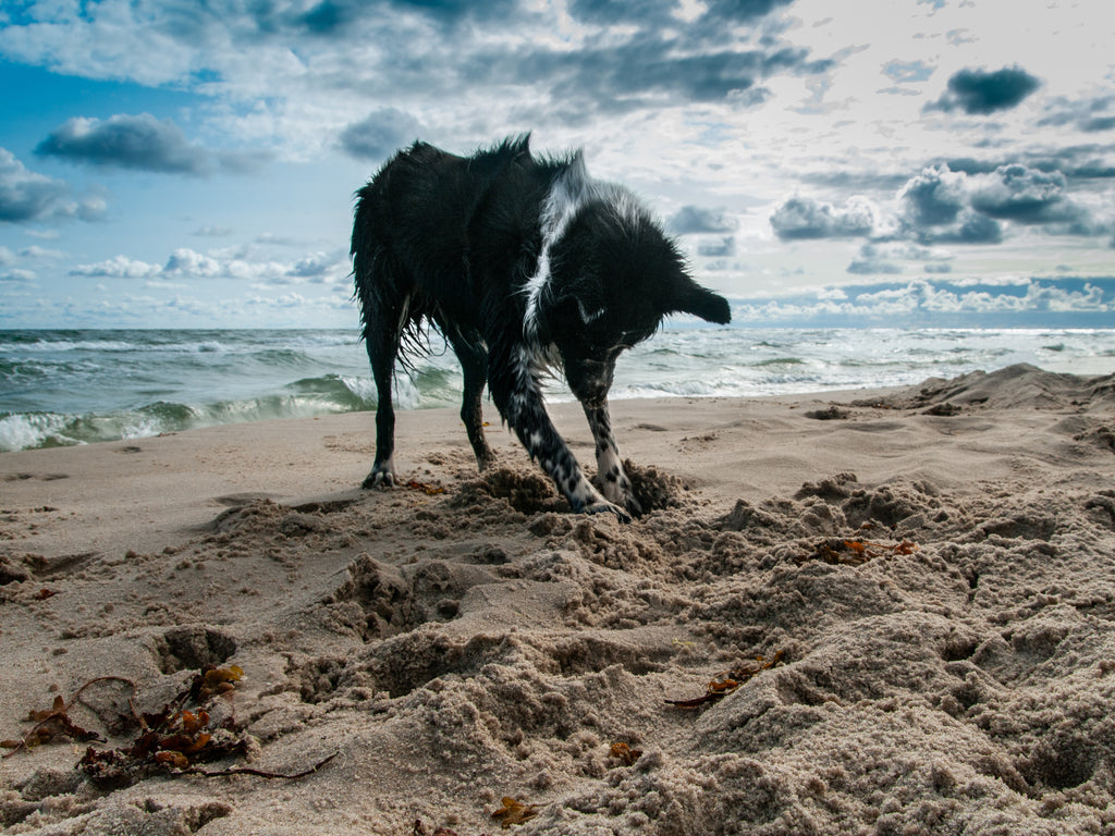 Dog friendly beaches for Autumn