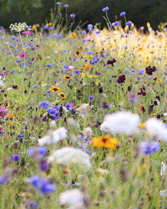 A flower garden is much like a microbiome
